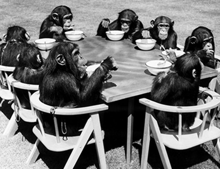 chimps-tea-party
